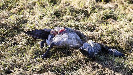 geflugelhalter-werden-gebeten-ihre-tiere-vor-der-geflugelpest-zu-schutzen-und-die-sicherheitsmanahmen-kritisch-zu-prufen