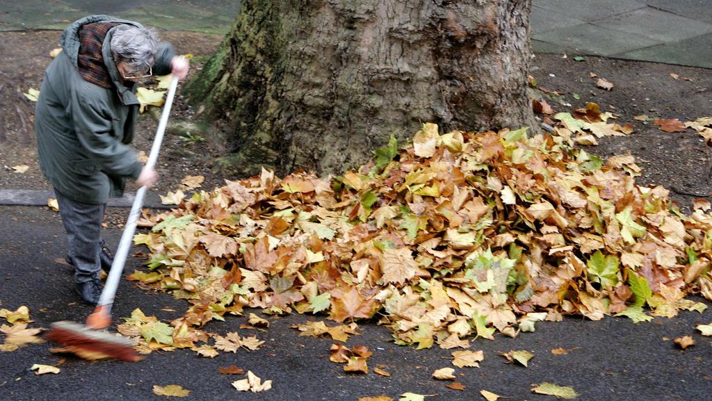 """Eine Frau fegt am Montag (07.11.2005) in Dortmund am Fuße eines Baumes Laub zusammen. Das Hoch """"Verena"""" vereint sich am Dienstag (08.11.2005) mit dem Hoch """"Ute"""" über Russland und bringt Nordrhein-Westfalen einen schönen Herbsttag. Das Tief """"Lutz"""" am"""