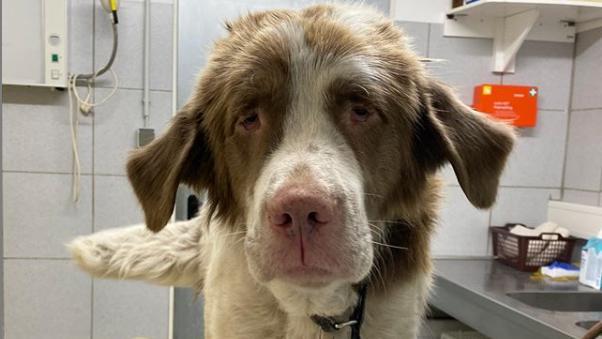 Hund Abgeben Wegen überforderung