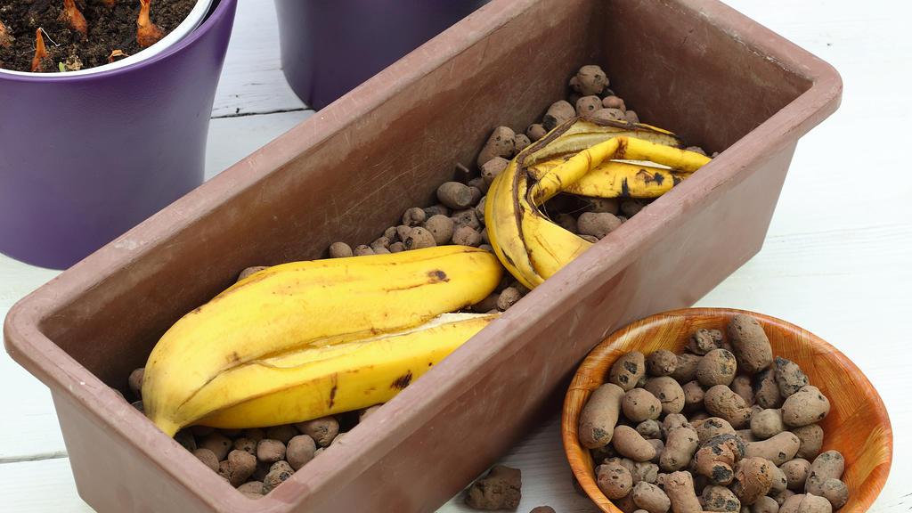 Perfekter Dünger für Pflanzen: Bananenschale