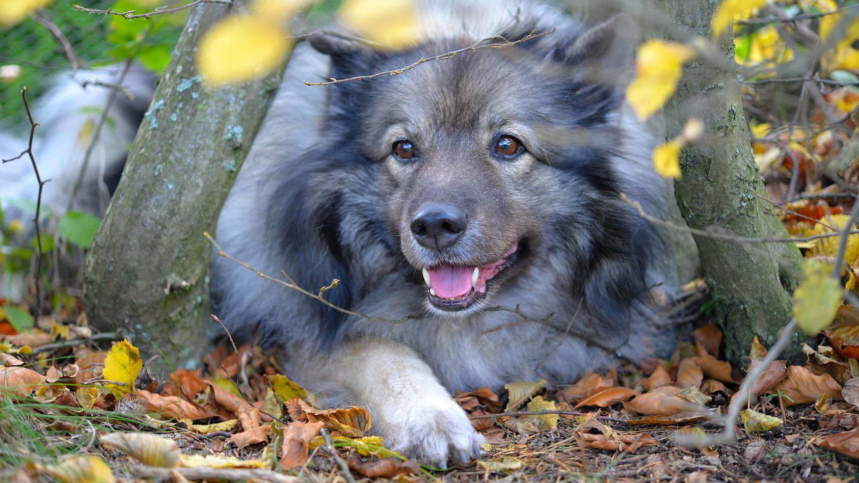 Hundehalter sollten ihre Vierbeiner impfen lassen.