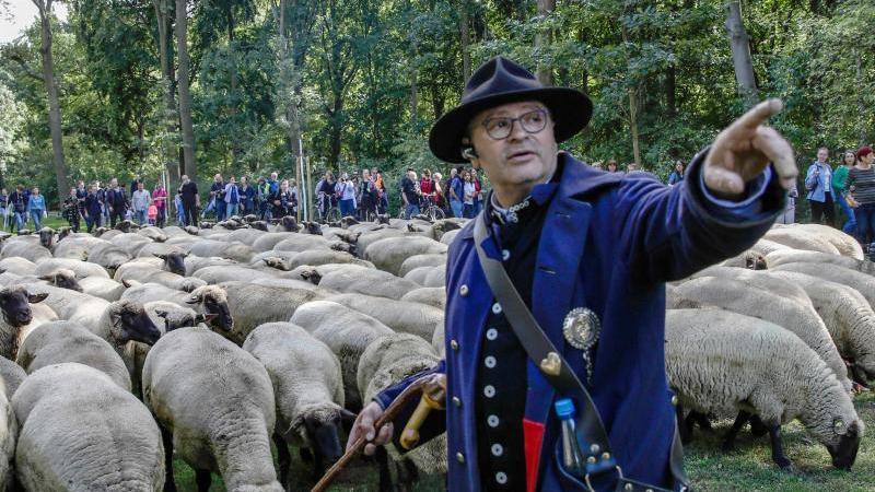 Knut Kucznik, Schäfer, vor einer Schafherde. Foto: Carsten Koall/dpa/Archivbild