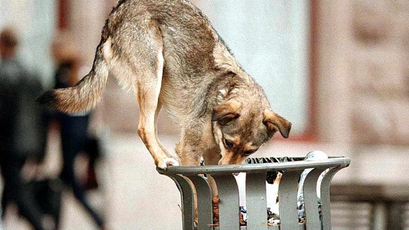 Straßenhund in Kiew