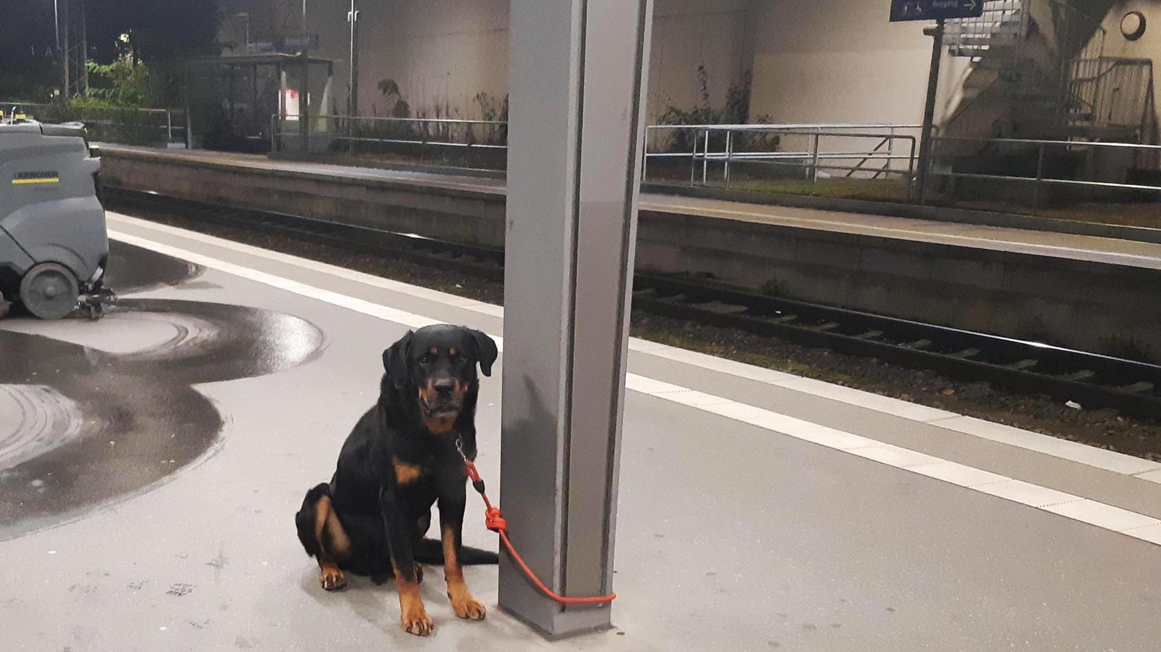 Ein verängstigter und aggressiver Rottweiler hat am Bremer Hauptbahnhof für Chaos gesorgt.