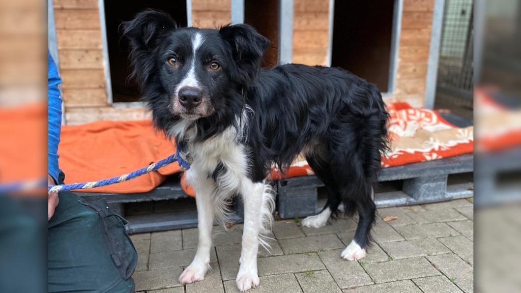 Hund Mo im Tierheim Köln-Dellbrück