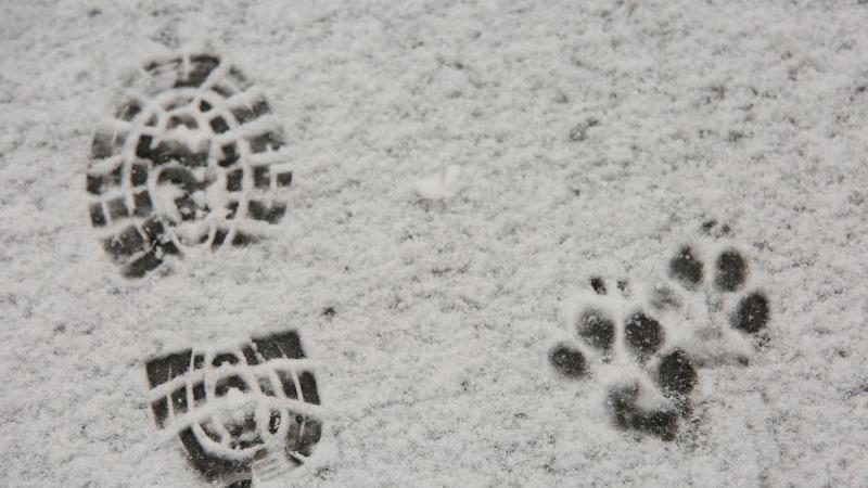 Spuren eines Schuhabdruckes und eines Hundes im Schnee. Foto: Matthias Bein/dpa-Zentralbild/dpa/Symbolbild