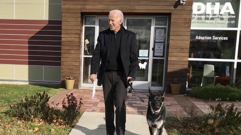 Joe Biden mit seinem Deutschen Schäferhund Major.