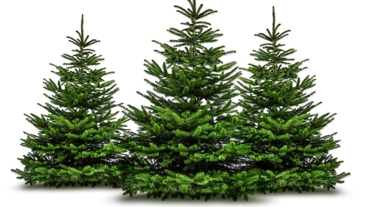 Ob sattgrüne Nordmanntanne oder eisblau schimmernde Blaufichte - den passenden Baum zum Fest kann man sich auch ganz bequem liefern lassen.