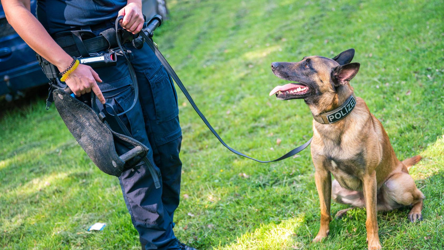 Symbolbild: Polizeihunde