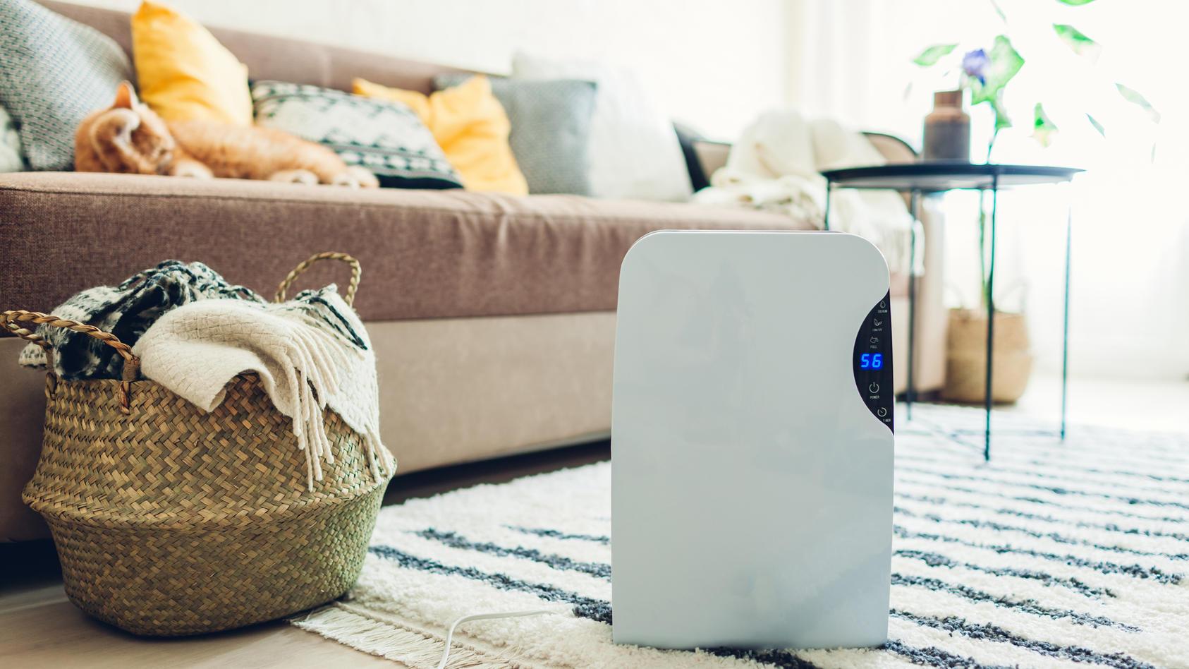 Maßnahme gegen trockene Heizungsluft: Luftbefeuchter im Wohnzimmer.