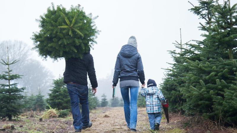 Erst mit einem Christbaum wird Weihnachten zum Fest. Bei Kauf und Lagerung muss man aber einiges beachten. Foto: Christin Klose/dpa-tmn