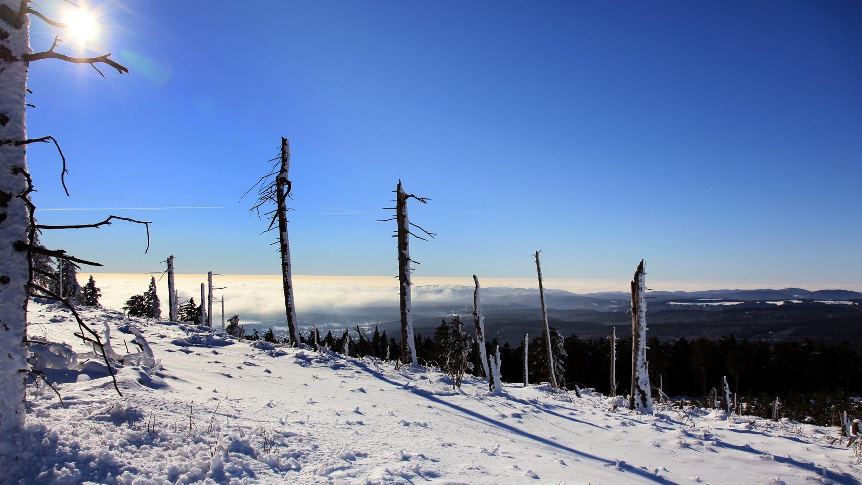 Sonnenschein und Neuschnee im Harz