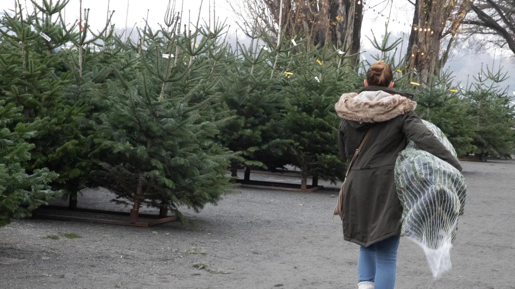 Wo kann man jetzt noch Weihnachtsbäume kaufen?