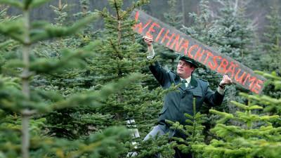 """Der Revierförster Marko Schöberle von der Forstverwaltung des Schlossgutes im brandenburgischen Alt Madlitz (Oder-Spree) befestigt in einer Schonung ein Schild mit der Aufschrift """"Weihnachtsbäume"""", aufgenommen am 19.11.2007. In der Weihnachtsbaumplan"""