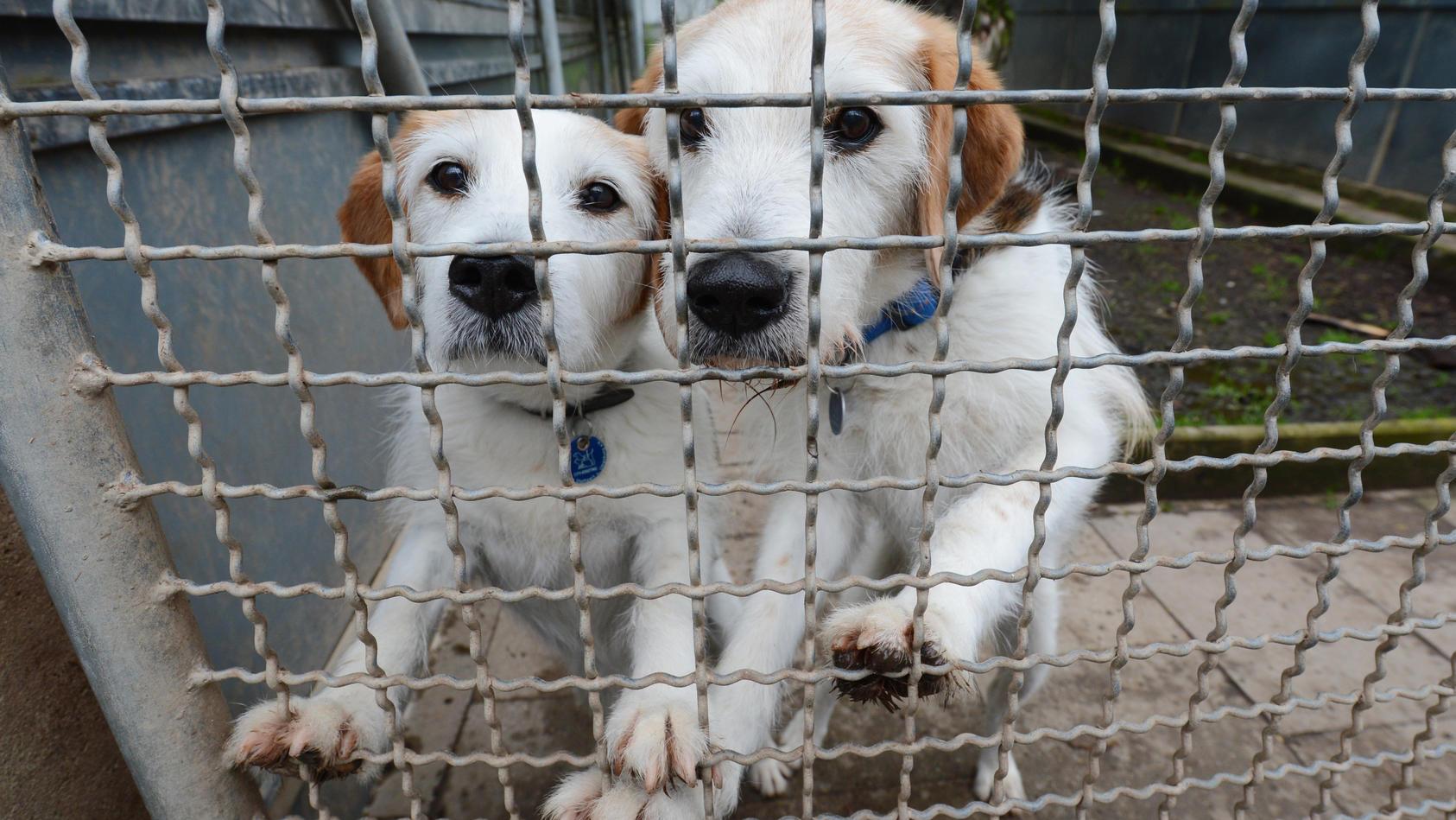 Immer mehr Hunde landen in Großbritannien im Tierheim. Auch in Deutschland zeichnet sich ein besorgniserregender Trend wegen der Corona-Pandemie ab. (Symbolbild)