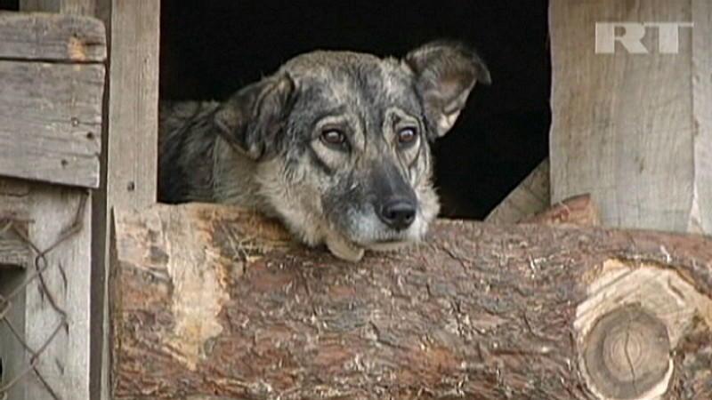 Die UEFA spendet erneut 8.600 Euro zum Schutz von Straßenhunden in der Ukraine.