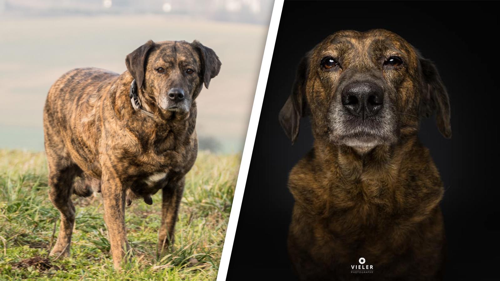 Vom Straßenhund in Rumänien zum Fotomodel in Deutschland