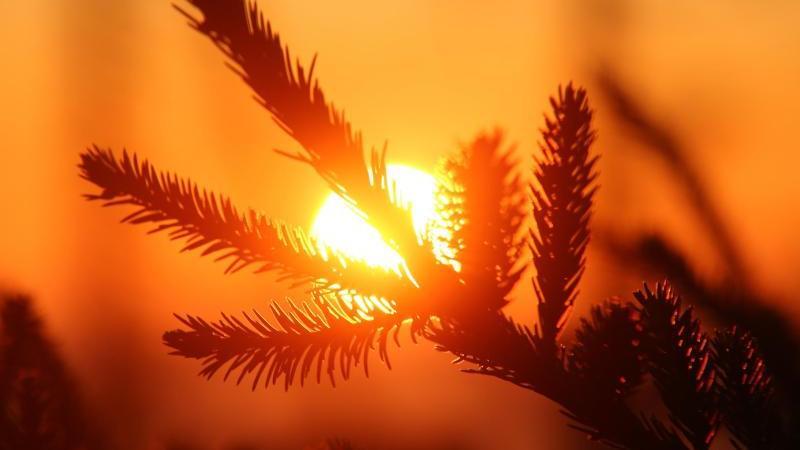 Zum Sonnenaufgang färbt sich der Himmel am Horizont. Foto: Matthias Bein/dpa-Zentralbild/dpa