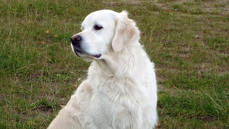 Wenn Hunde in Ihren Träumen vorkommen, kann das verschiedene Gründe haben
