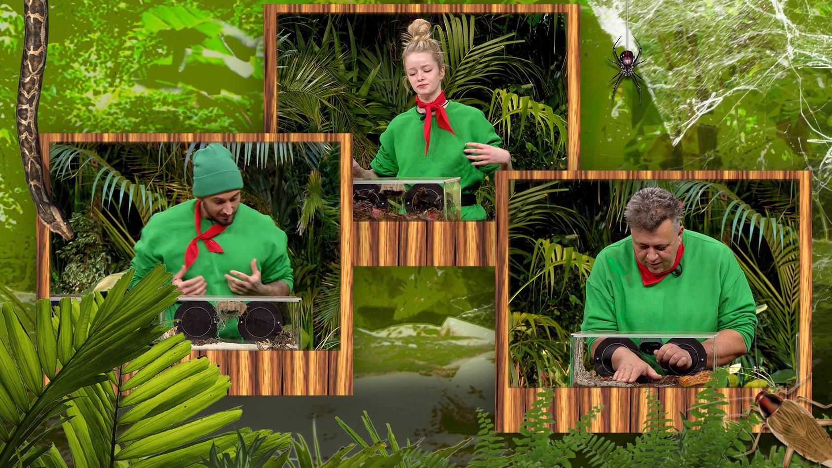 Dschungelshow: Mike Heiter, Zoe Saip und Frank Fussbroich bei ihrer zweiten Prüfung