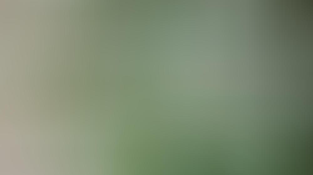 Heimische Vogelarten wie der Grünfink brauchen im Winter Hilfe bei der Futtersuche. (Symbolbild)