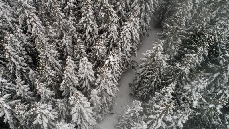 Schneebedeckt sind die Bäume in einem Wald am Brocken. Foto: Matthias Bein/dpa-Zentralbild/dpa/Symbolbild
