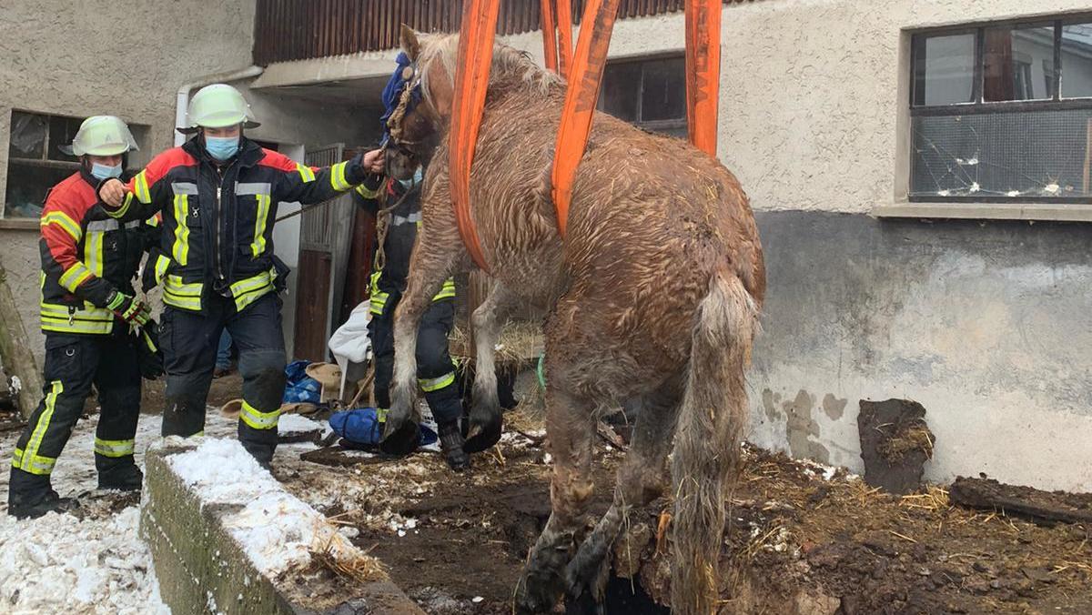 In Weil der Stadt musste die Feuerwehr ein Pferd aus einer Güllegrube retten.