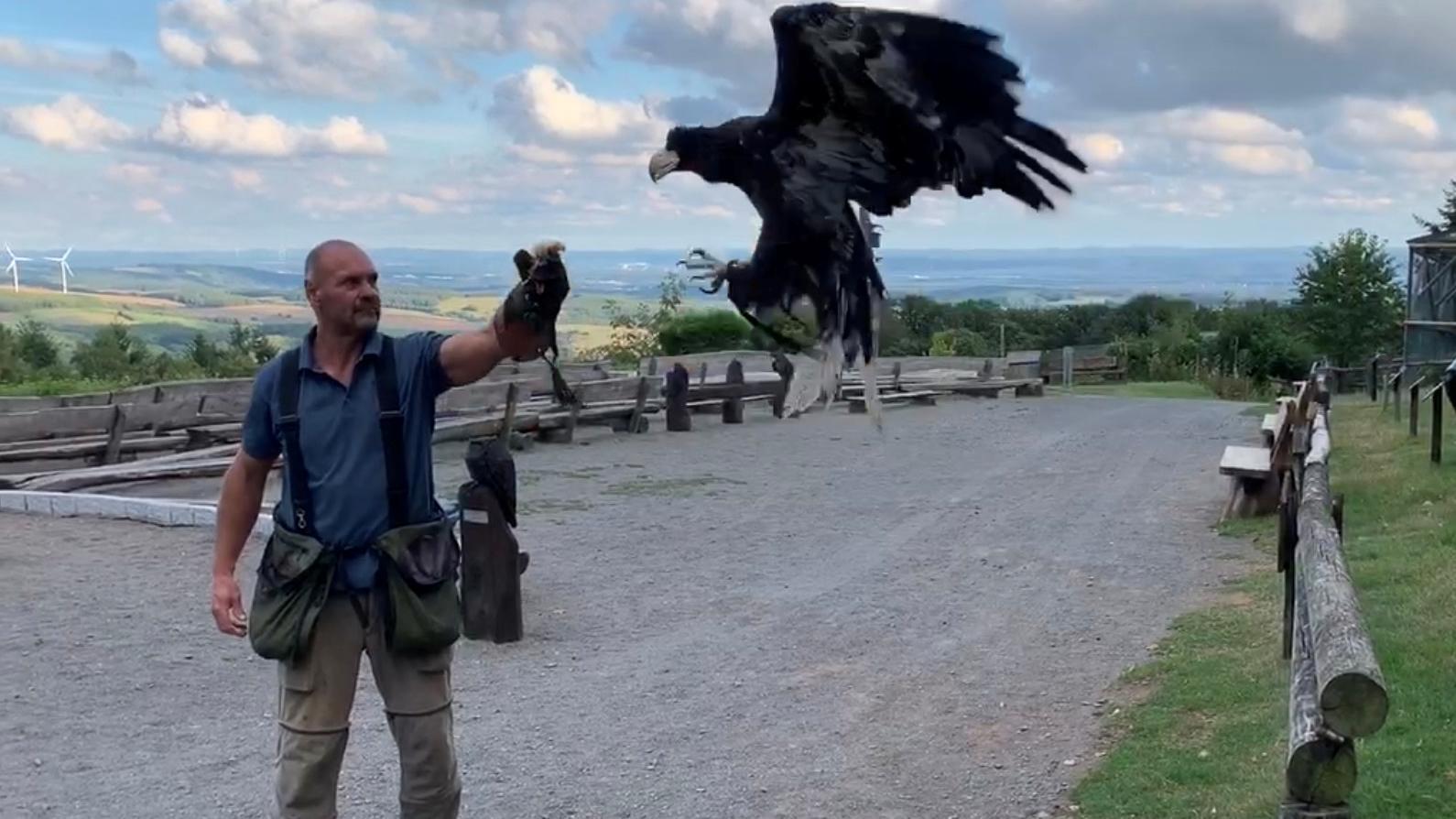 Harald Schauß mit seinem Riesenseeadler Lagatha.