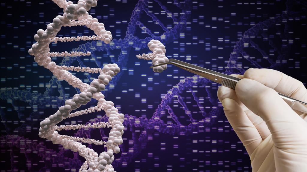 Mithilfe der Genschere Crispr/Cas9 können Gene manipuliert werden.
