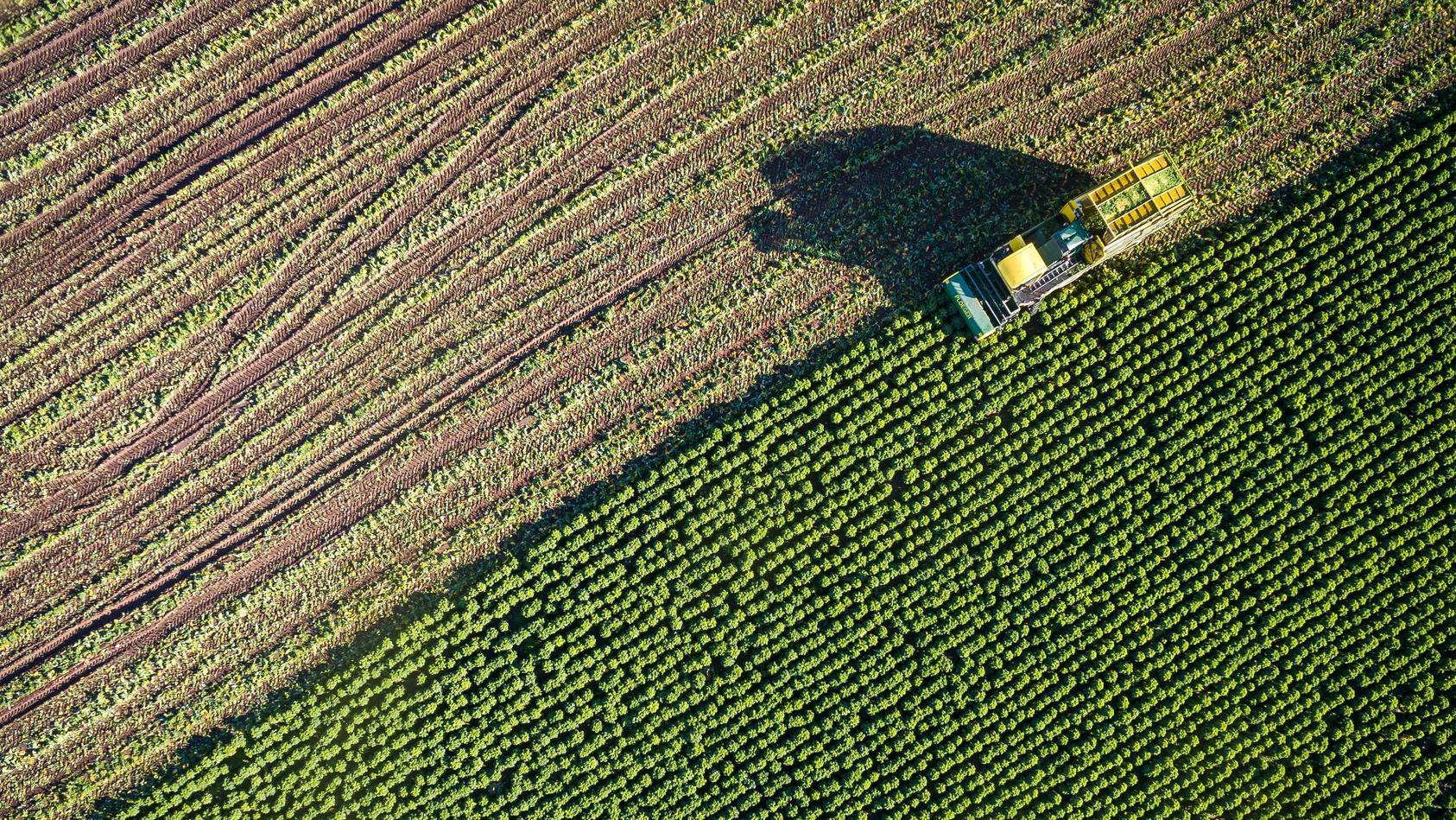 Bauernregeln werfen schon einmal einen Blick auf die kommenden Ernteerträge.