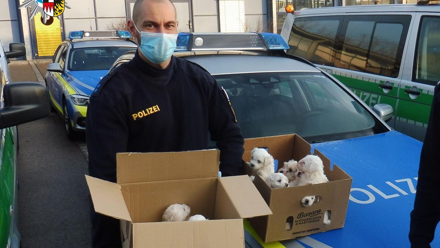 Die Polizei Ansbach hat einen illegalen Welpenhandel gestoppt - und die Welpen mit auf die Wache genommen.
