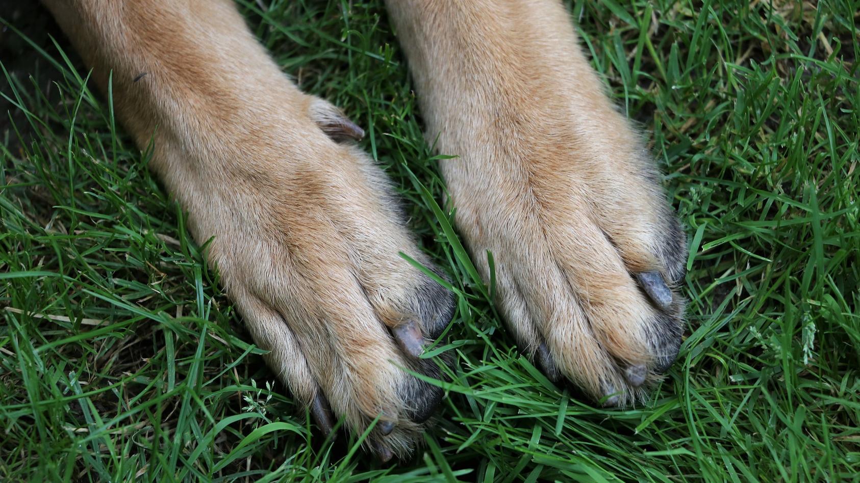 Zwei Hundehalter sind in Bremerhaven aufeinander losgegangen.