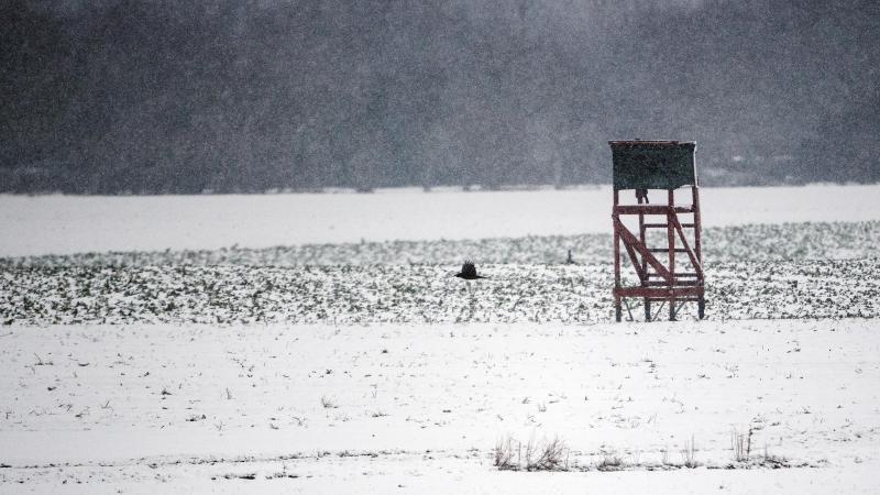 Ein Vogel fliegt über die verschneiten Felder. Foto: Federico Gambarini/dpa/Symbolbild