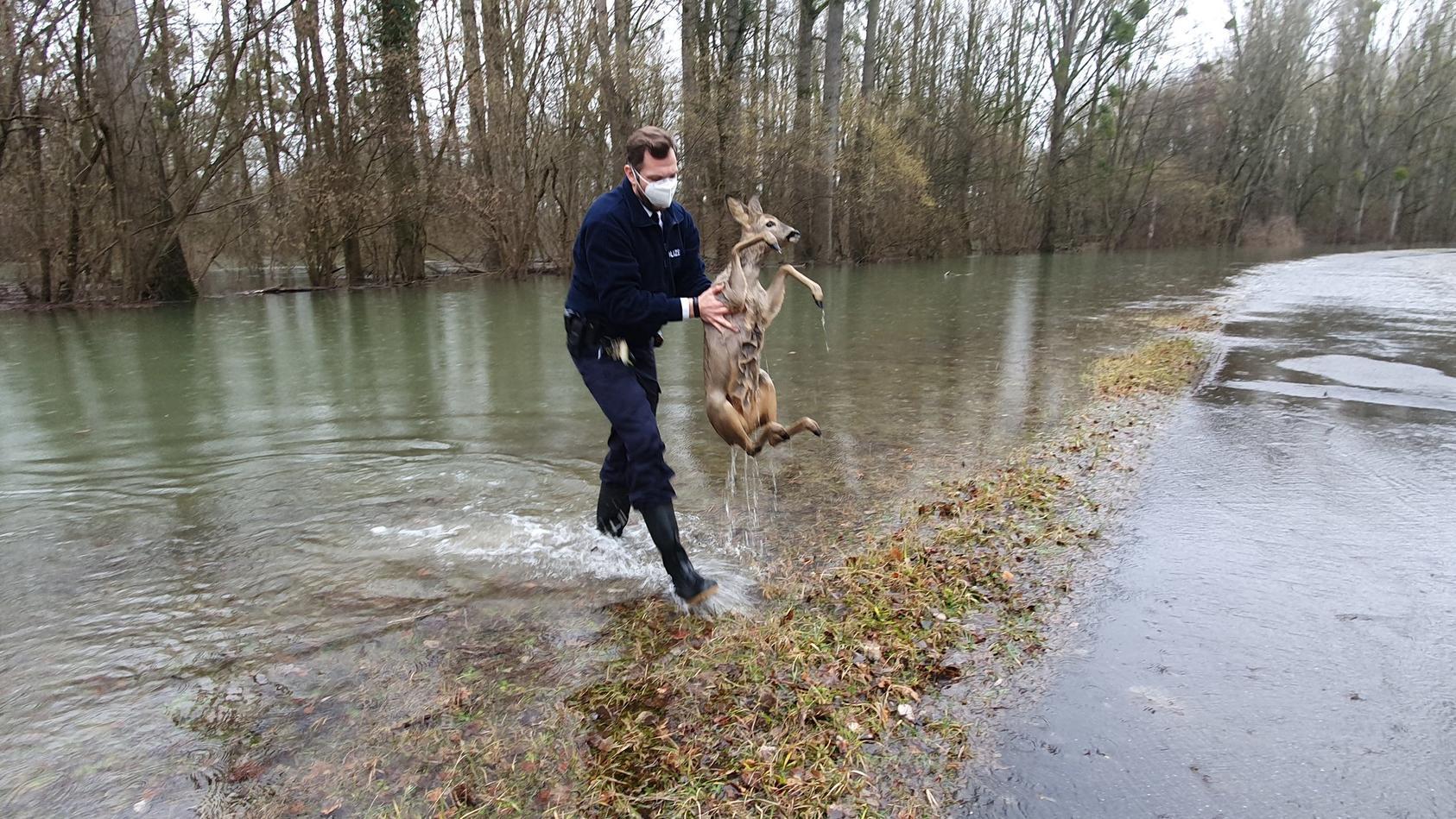 Polizei rettet Rehe vor dem Ertrinken. Viele Tiere müssen Hochwasser fürchten, manche profitieren aber auch.