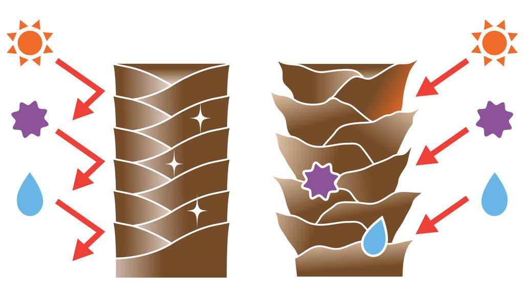 Gesundes, glattes Haar vs. brüchiges Haar,  dessen Schuppenschicht geöffnet ist.
