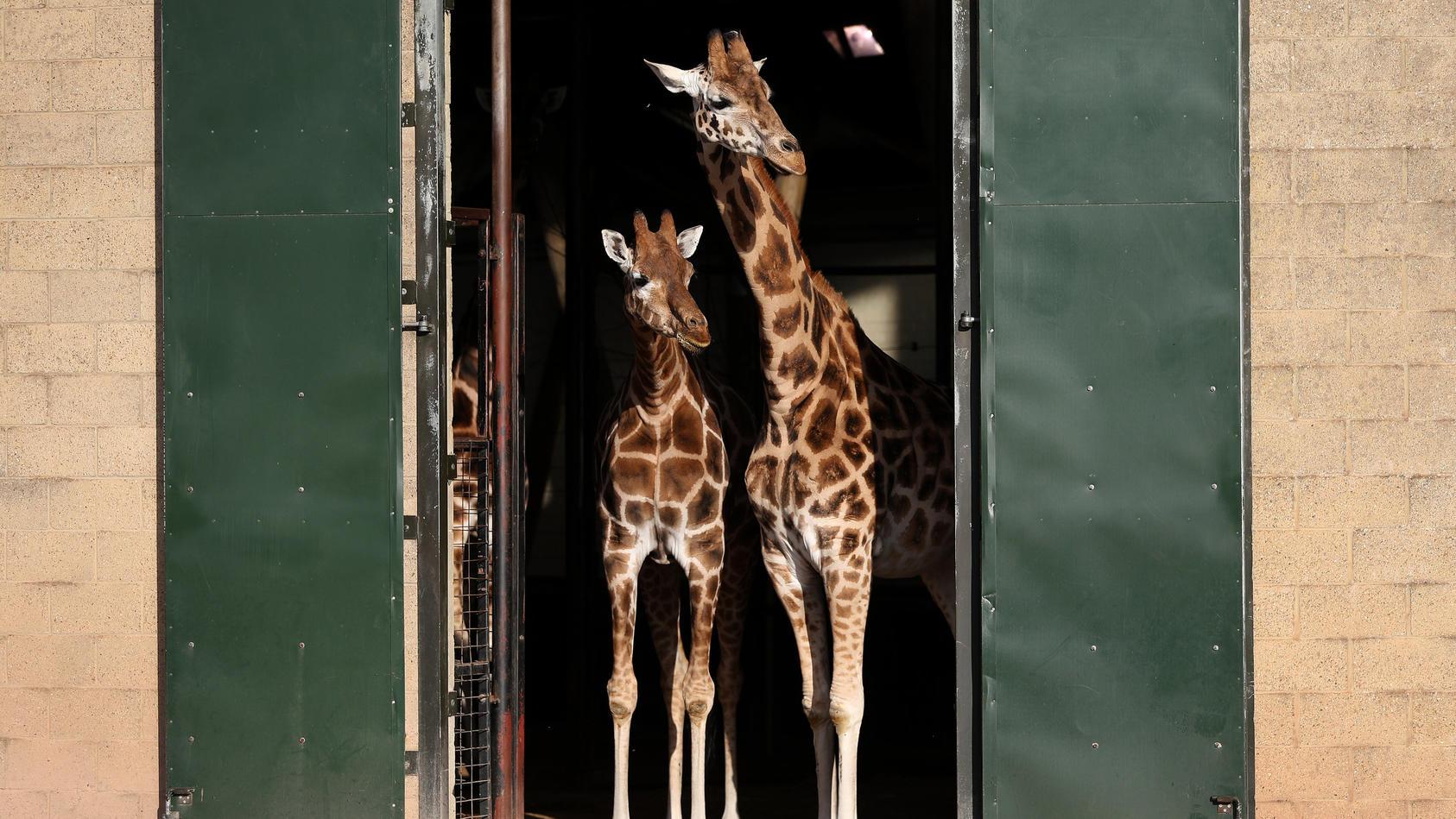 Mehrere Täter haben die Tiere im Marwell Zoo mit Flaschen und Steinen beworfen.