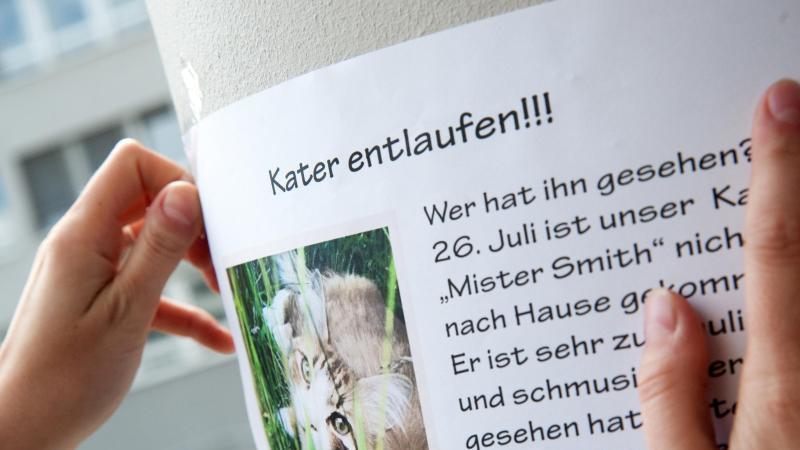 Mit Suchplakaten kann man auf vermisste Tiere in der Nachbarschaft aufmerksam machen. Foto: Mascha Brichta/dpa-tmn