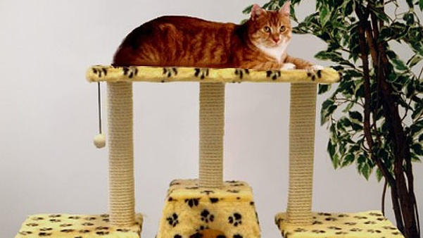 Katze auf Kratzbaum
