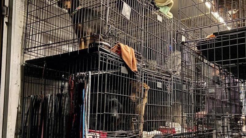 Illegaler Transport mit knapp 60 Tieren in Köln gestoppt