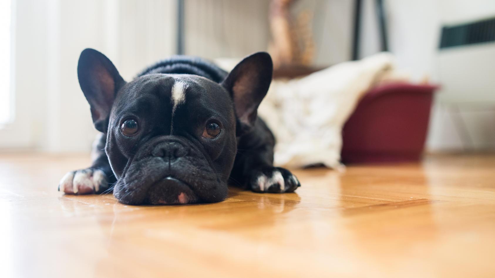 Wie sehr leiden unsere Haustiere unter dem Corona-Lockdown?