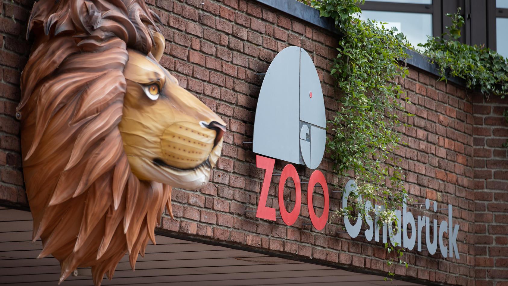 Bei einem Löwenangriff im Zoo Osnabrück wurde eine Tierpflegerin verletzt.