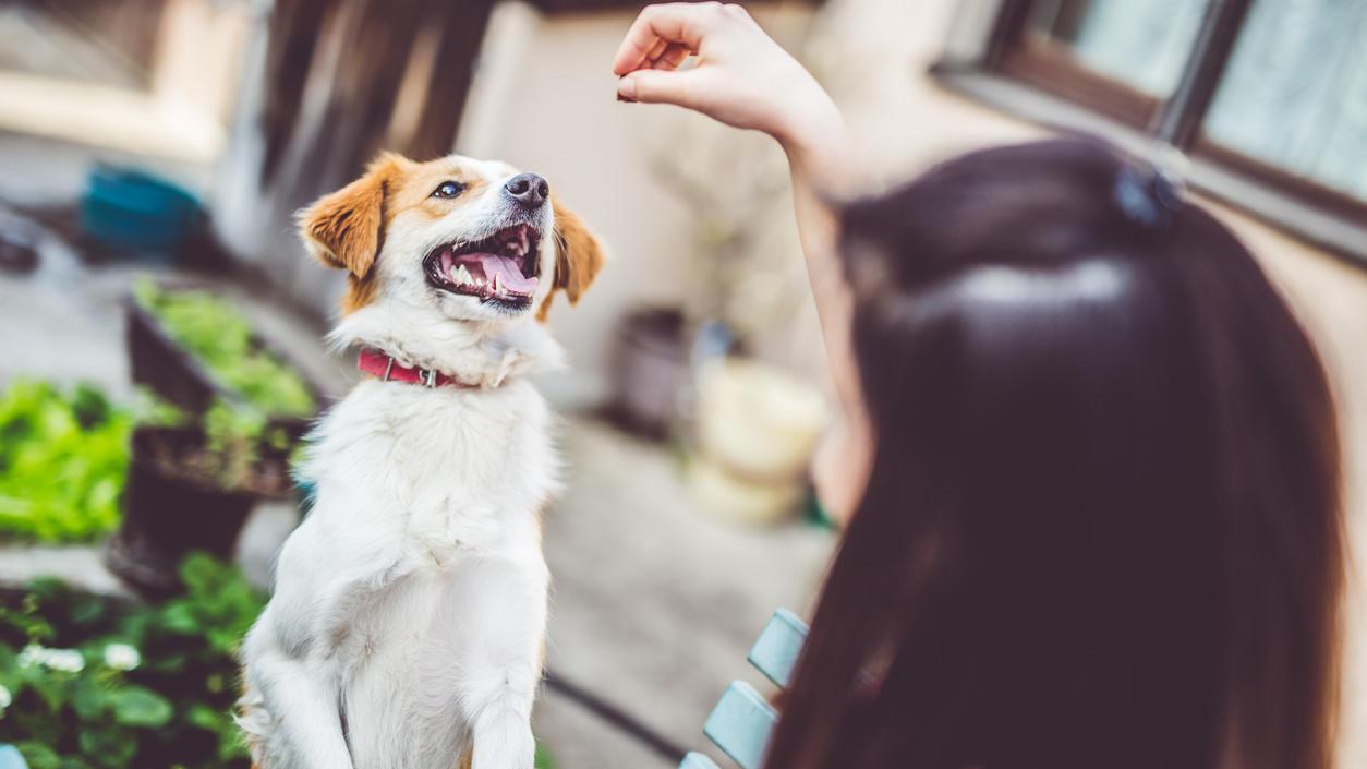 diese-leckerli-wird-ihr-hund-lieben