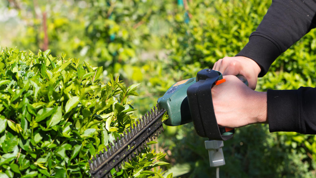 gartenarbeit,heckenschere,heckenschnitt *** gardening,hedge clippers,hedge trimming iau-hg0
