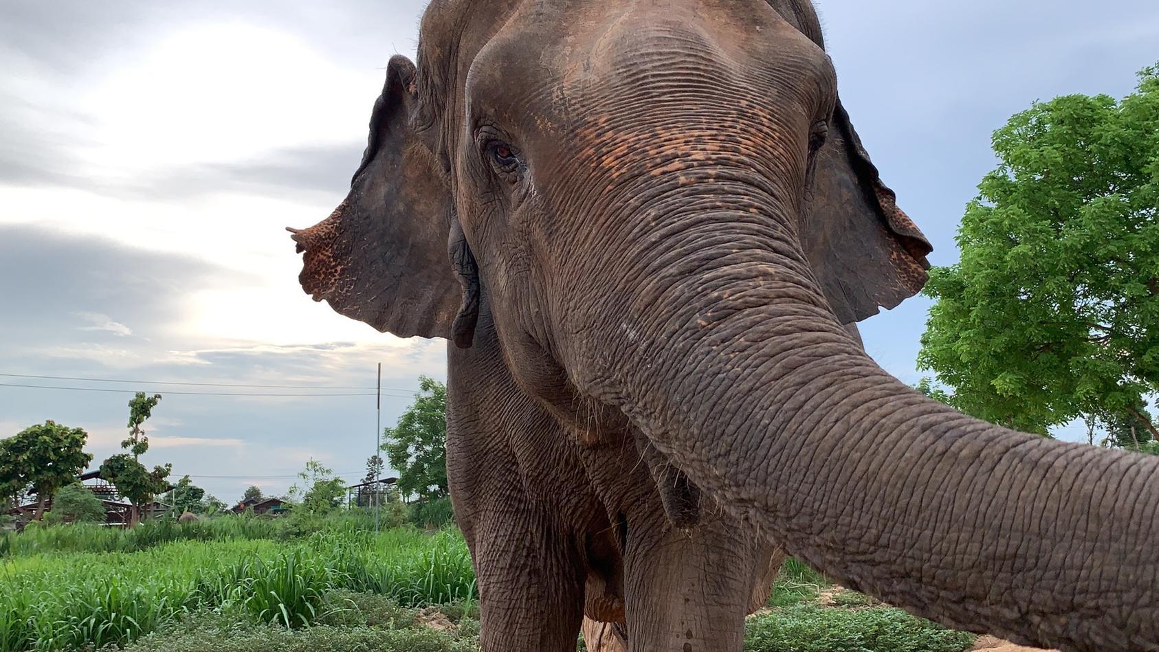 In Spanien wurde ein Tierpfleger von einer Elefantenkuh getötet (Foto: Motivbild)