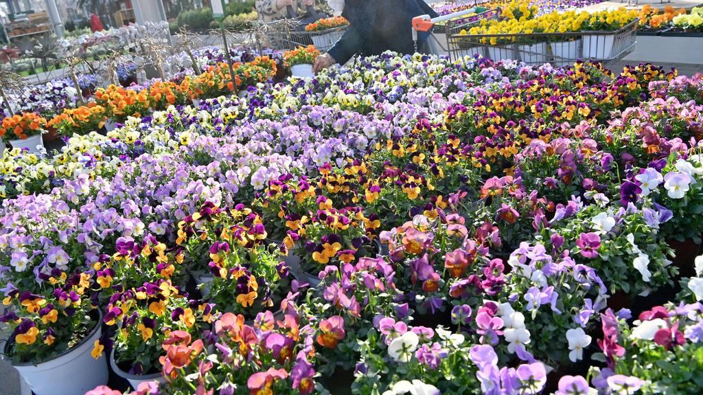 Kunden kaufen in einem Gartencenter ein. Im Rahmen der ersten Corona-Lockerungen dürfen zum Frühlingsstart Hobby-Gärtner in mehreren Bundesländern wieder in Bau- und Gartenmärkten stöbern. Foto: Peter Kneffel/dpa +++ dpa-