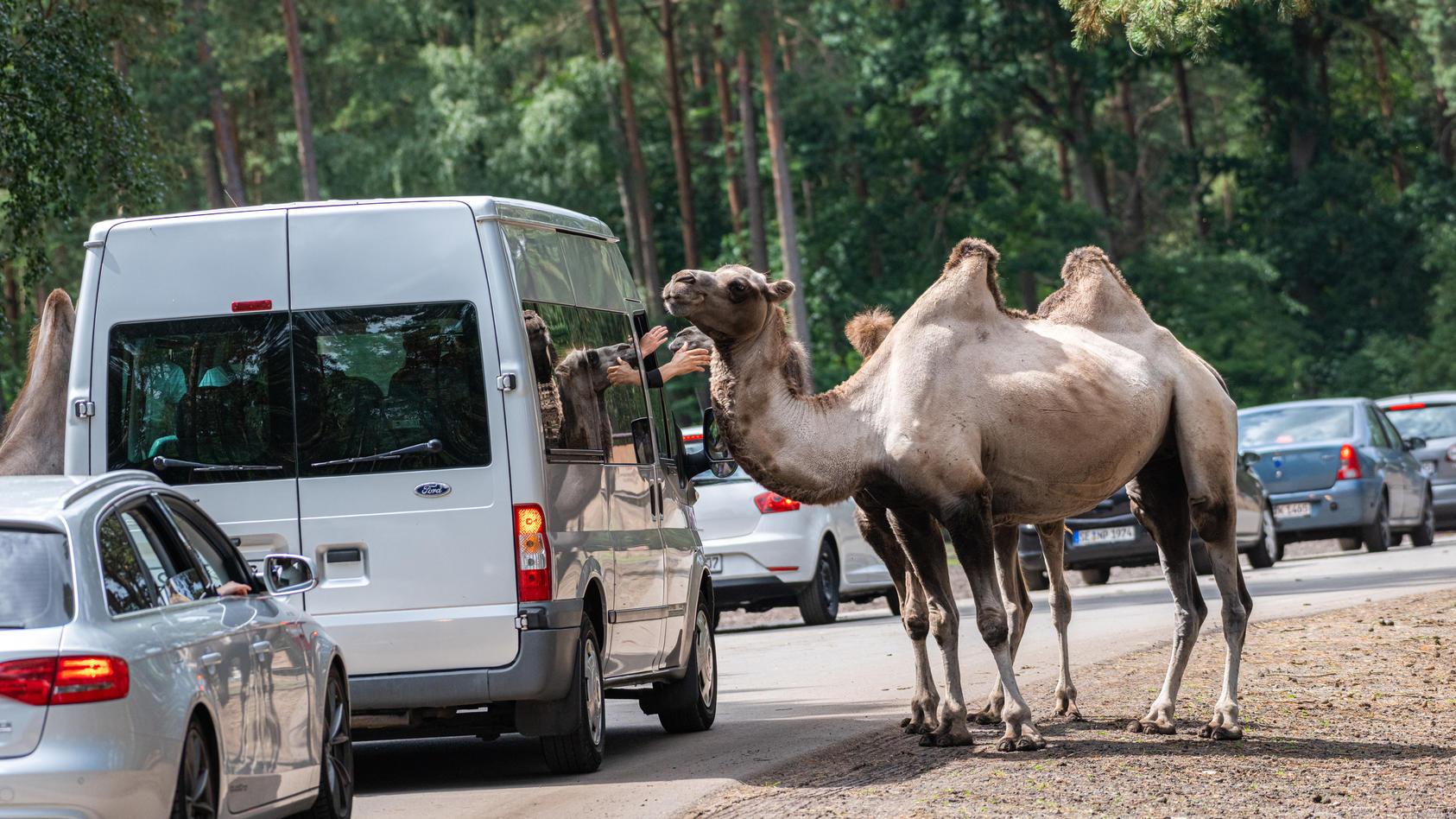 Erste Tierparks in Niedersachsen öffnen Montag