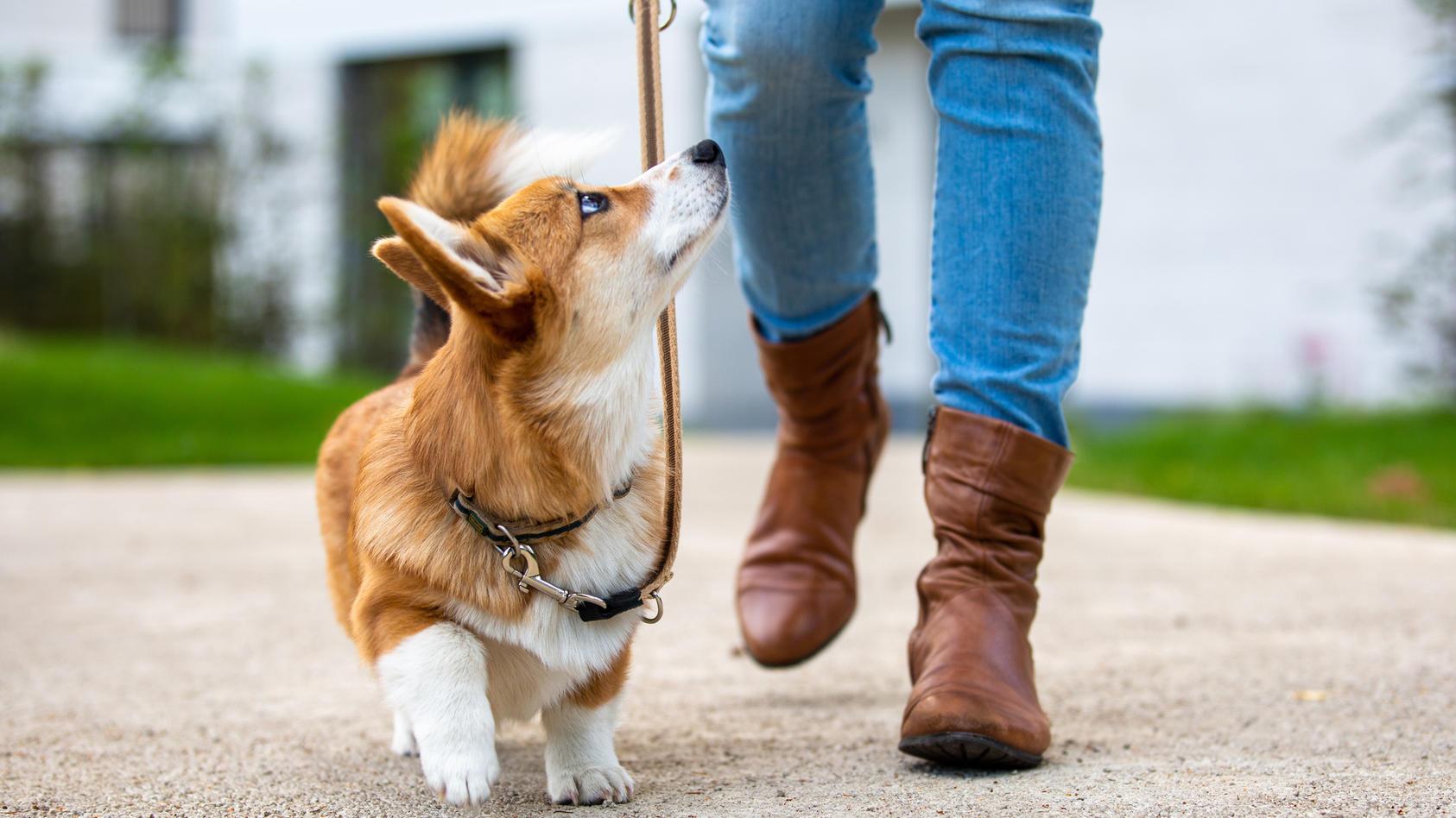 """Die Stiftung """"Vier Pfoten"""" bittet darum, dass Besitzer Ihre Hunde nur an der Leine ausführen."""