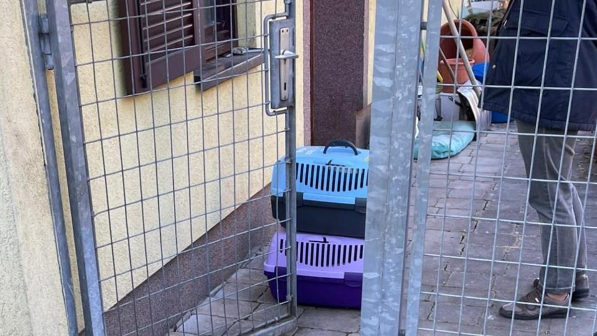 """Der Verein """"Tierschutz Aktiv"""" deckte den Fall auf."""