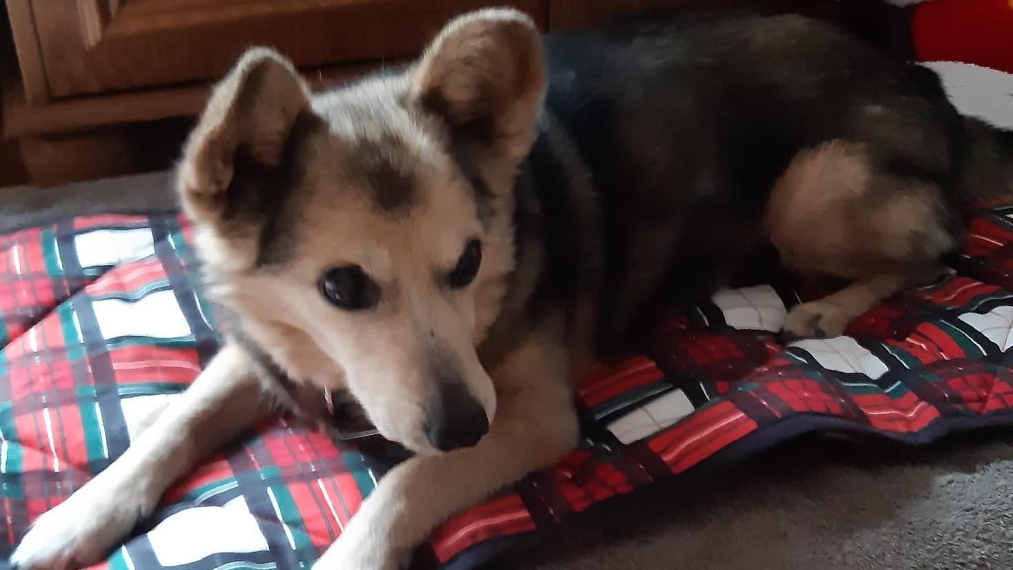 """Hund """"Krümel"""" wurde vor einer Bäckerei entführt."""