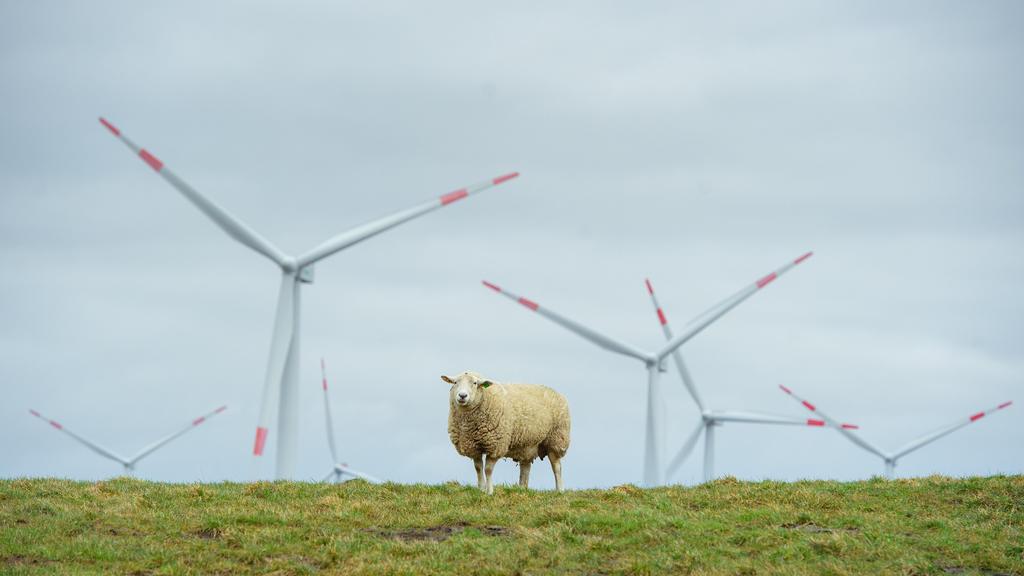 15.03.2021, Schleswig-Holstein, Dagebüll: Ein Schaf steht auf einem Deich an der Nordseeküste bei Dagebüll. Im Hintergrund sind Rotoren von Windrädern zu sehen. Foto: Gregor Fischer/dpa +++ dpa-Bildfunk +++